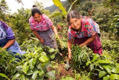 2014.07 photo Nahuala garden project