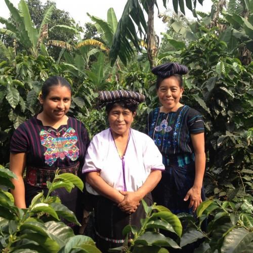 3 Women in Coffee Field